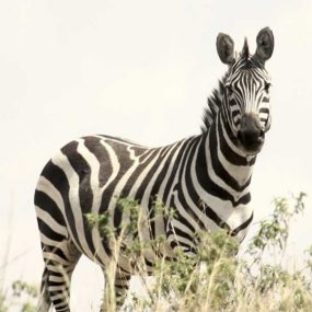 5 Day Uganda Honeymoon Safari to Lake Mburo national park will take you to Lake Mburo national park, horseback riding