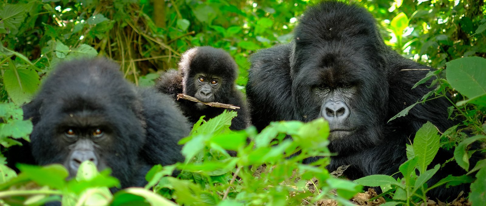 10 Days Wildlife And Gorilla Trekking Group Tour