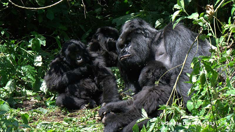 What to expect on a Uganda Rwanda safariVery exciting, very adventurous and always interesting. You can get around by driving