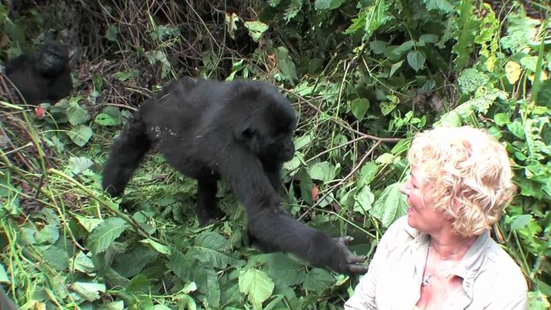 Age Limit For Gorilla Trekking
