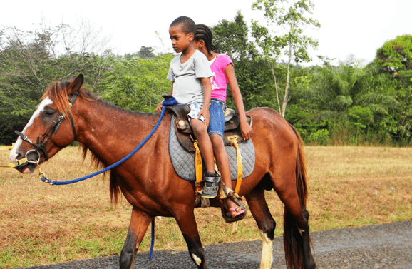 Horseback Riding; exciting activity in Lake Mburo National Park. Because of the diverse topography and ecology across the Park, from falling and raising hillsides, rocky outcrops, open and wooden grassland, rich acacia tree valleys, forests, bushes, thickets to permanent swamps along the shores of the Lakes.