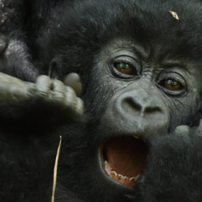 pick up from hotel in Kampala – drive to Bwindi,Gorilla tracking – The great memorable experience, Bwindi back to Kampala drop at the Hotel,Kampala city tour and departure at Entebbe airpor