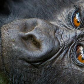 Nyungwe Forest, Kigali City Tour, Kibuye- Volcanoes national park in Kinigi, Gorilla tracking,
