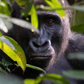 Chimpanzee tracking in Nyungwe forest and afternoon bird watching