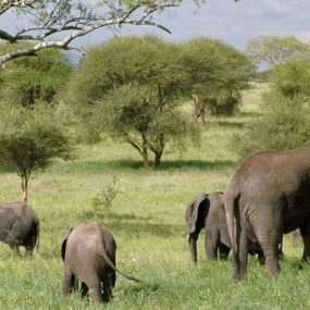The lush plains of the Serengeti have made it an ideal home to wildlife for millions of years