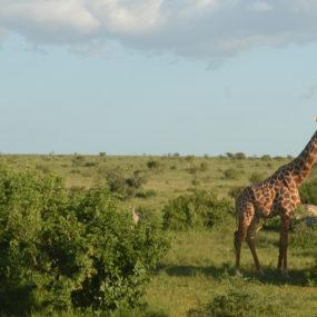 9 Days Kenya Safari in the Wilderness