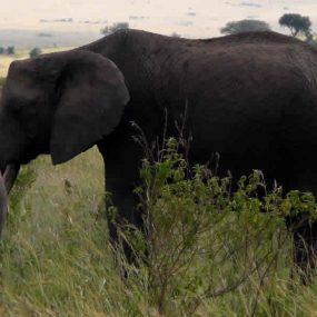 Nairobi – Amboseli National Park, Amboseli – Lake Nakuru, Lake Nakuru – Maasai Mara, Maasai Mara, Maasai Mara – Nairobi