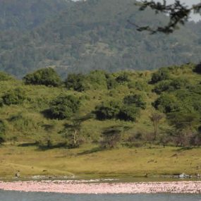 Ngorongoro Crater Safari explores the world-renowned northeast corner of Tanzania