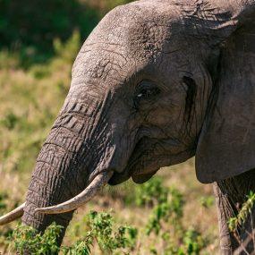 Murchison falls national park wildlife safari in Uganda, will take you to Ziwa rhino sanctuary