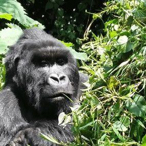 wildlife sighting and gorilla tracking Adventure tour Lake Mburo National Park for night game drive, horseback riding Bwindi Impenetrable Forest National Park