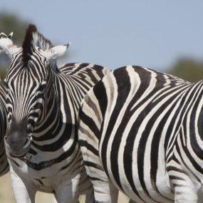Lake Mburo national park Uganda Safari to Lake Mburo National Park for wildlife adventure, bird watching