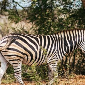 Uganda wildlife safari to Lake Mburo national park will take you to explore Uganda's smallest National Parks. Lake Mburo National park