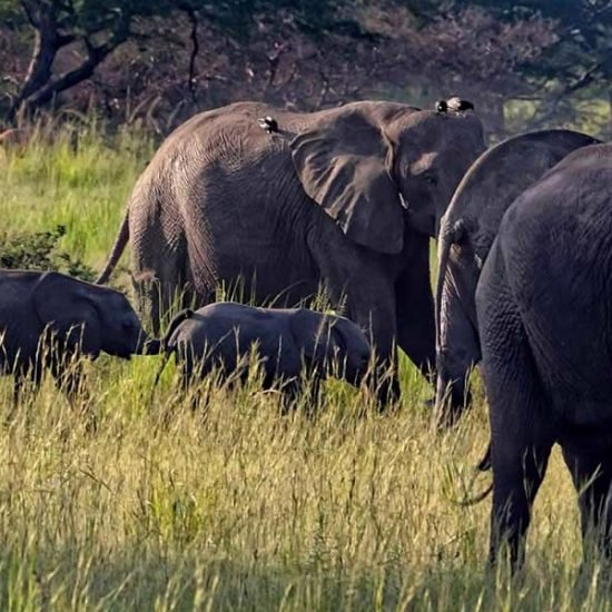 6 days Uganda safari will take you to Kidepo valley national park which was ranked third among the Africa's supreme wilderness destinations visit Jinja city