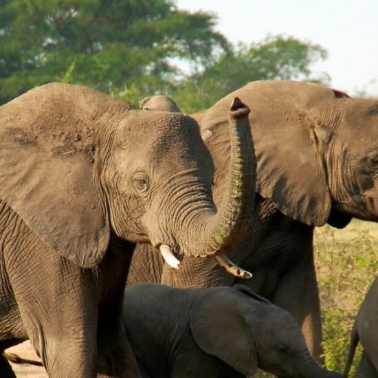 fly-in Uganda Safari to Kidepo valley national park will take you to North Eastern part of Uganda