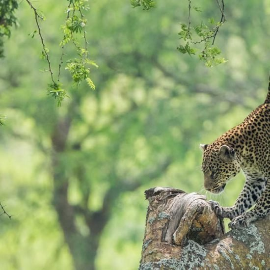 Kidepo Valley National Park is one of the most isolated and rate national park in Uganda