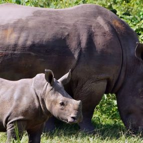 2 Days tour to Ziwa Rhino Sanctuary
