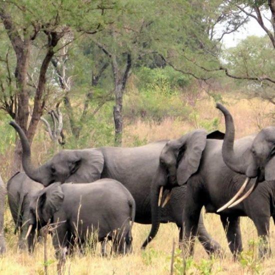 Uganda tour will take you to Semuliki National Park