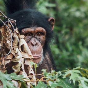 wildlife, gorilla and chimpanzee trekking safari, night wildlife sighting game drive, horseback riding, Queen Elizabeth national park