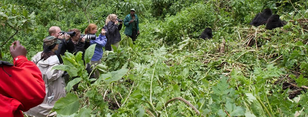 Mountain Gorilla Trekking in Uganda, Rwanda and DR Congo