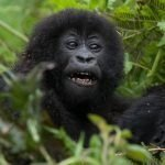 Activities in Buhoma Sector of Bwindi Impenetrable national park Besides mountain gorilla trekking tourism, there are several
