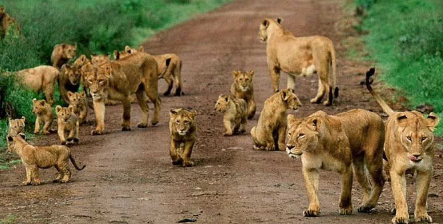 Facts About Queen Elizabeth National Park, Where is Masai Mara National Reserve located?: Masai Mara National Reserve is one of the best interesting features and attractions that visitors would look at when deciding or planning to go for Kenya for the whole day's safaris