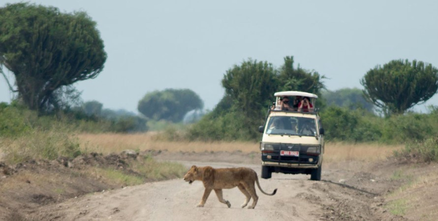 Queen Elizabeth national park is found in Kasese district of south western Uganda. Queen Elizabeth national park is the second largest national park in Uganda covering an area of 1978 square kilometers. The park is surrounded with tropical rainforests, savannah grassland