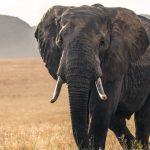 2021 Elephant naming ceremony in Kenya