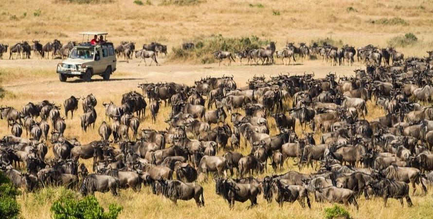 Wildlife safari and viewing in Serengeti national park