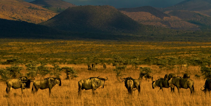 Best time to visit Amboseli National Park: Amboseli national park is on throughout the year meaning that the visitors can go and visit the park at any time that they wish however like any other African country or destination, the park features two seasons which are characterized by both wet and dry season