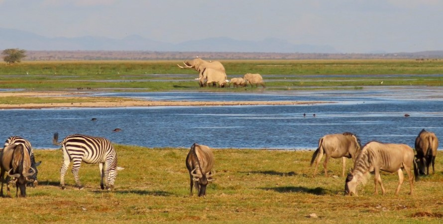 Best time to visit Amboseli National Park: Amboseli national park is on throughout the year meaning that the visitors can go and visit the park at any time that they wish however like any other African country or destination, the park features two seasons which are characterized