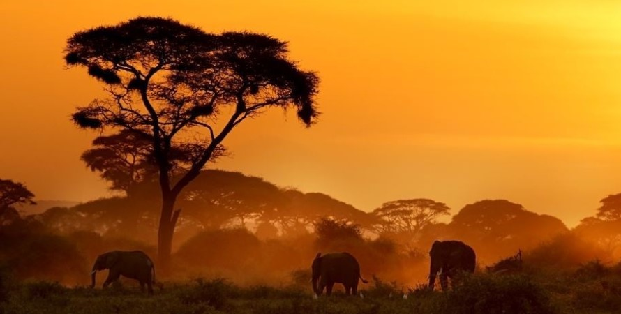 Where is Amboseli National park located: Most of the visitors who are trying to come to Kenya and Africa to explore Amboseli national park have frequently asked this question and thus the location of the Amboseli national park has become an important part of the information that the people